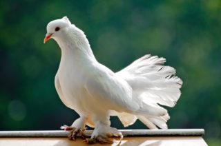 Kuş Besleyicisi hastalığı