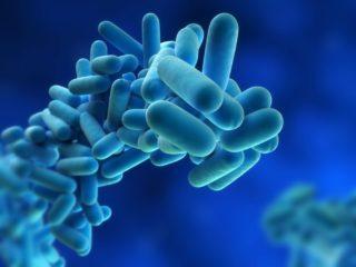Legionella Bakterisi